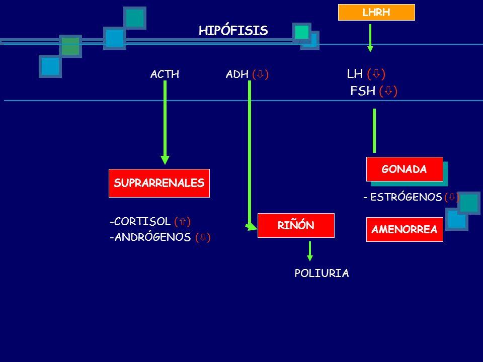 HIPÓFISIS FSH () SUPRARRENALES CORTISOL () ANDRÓGENOS () POLIURIA