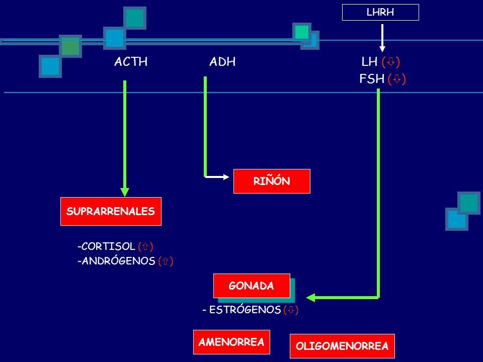FSH () LHRH ACTH ADH LH () RIÑÓN SUPRARRENALES CORTISOL ()