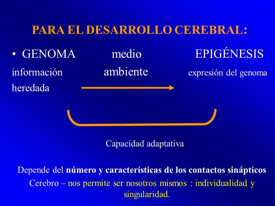 PARA EL DESARROLLO CEREBRAL: