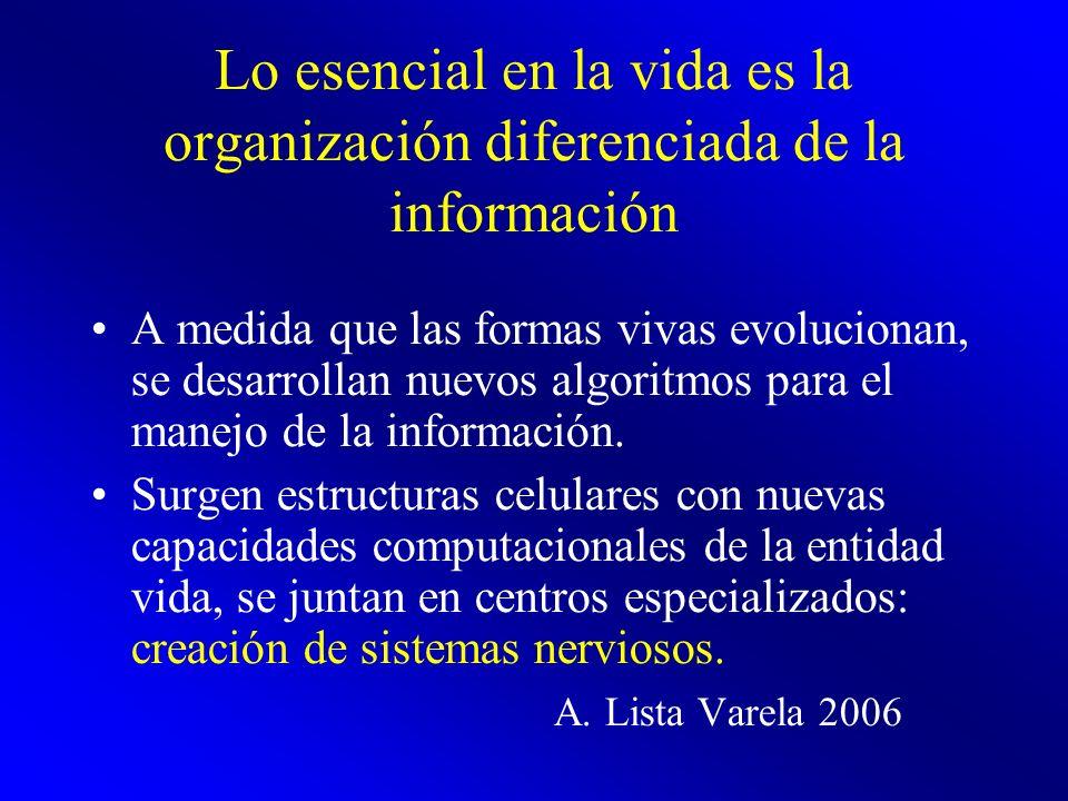 Lo esencial en la vida es la organización diferenciada de la información