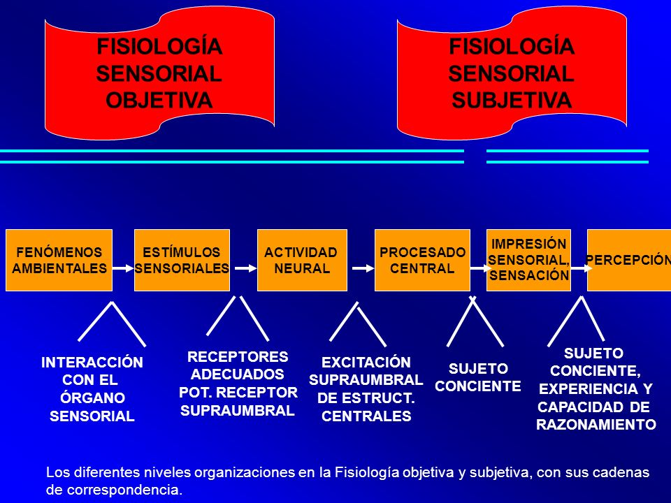 FISIOLOGÍA SENSORIAL OBJETIVA FISIOLOGÍA SENSORIAL SUBJETIVA