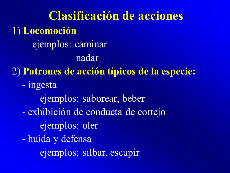 Clasificación de acciones