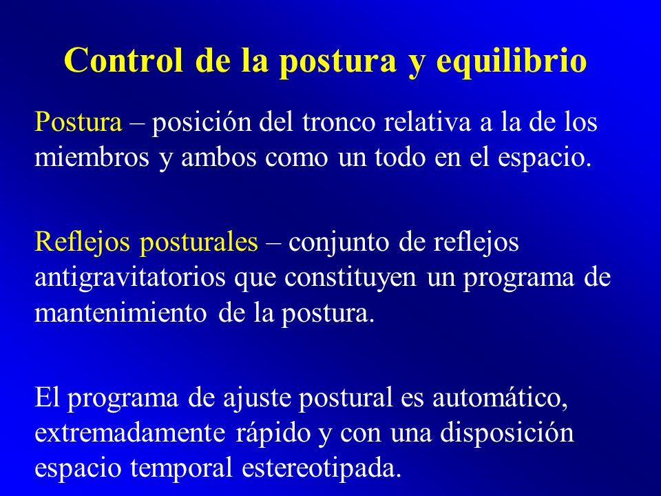Control de la postura y equilibrio