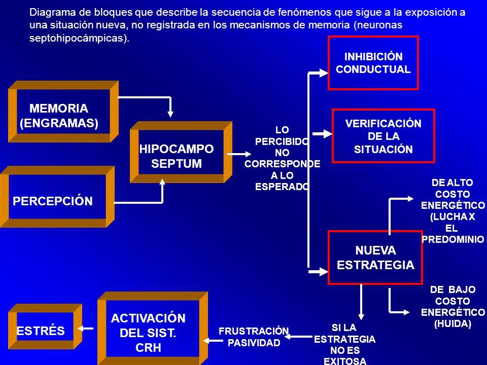 MEMORIA (ENGRAMAS) HIPOCAMPO SEPTUM PERCEPCIÓN NUEVA ESTRATEGIA