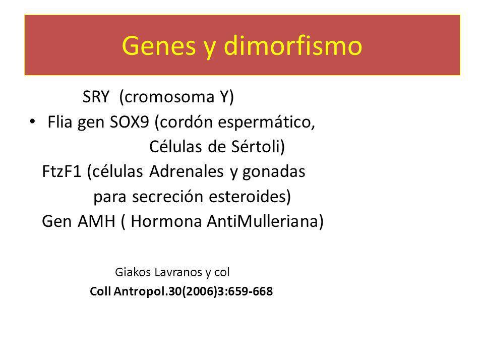 Genes y dimorfismo Gen SRY (cromosoma Y)