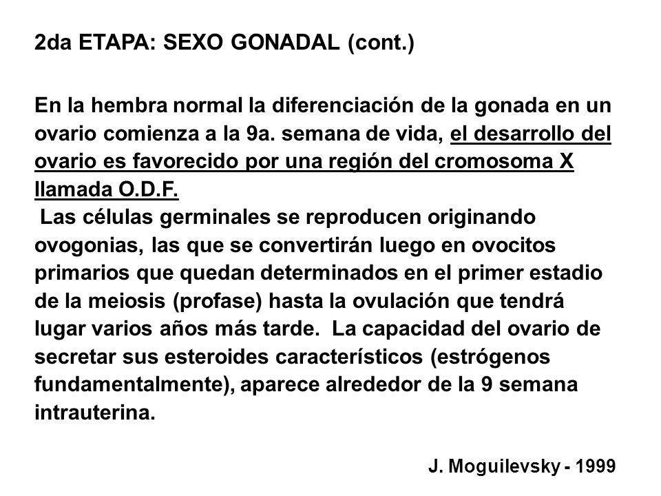 2da ETAPA: SEXO GONADAL (cont.)