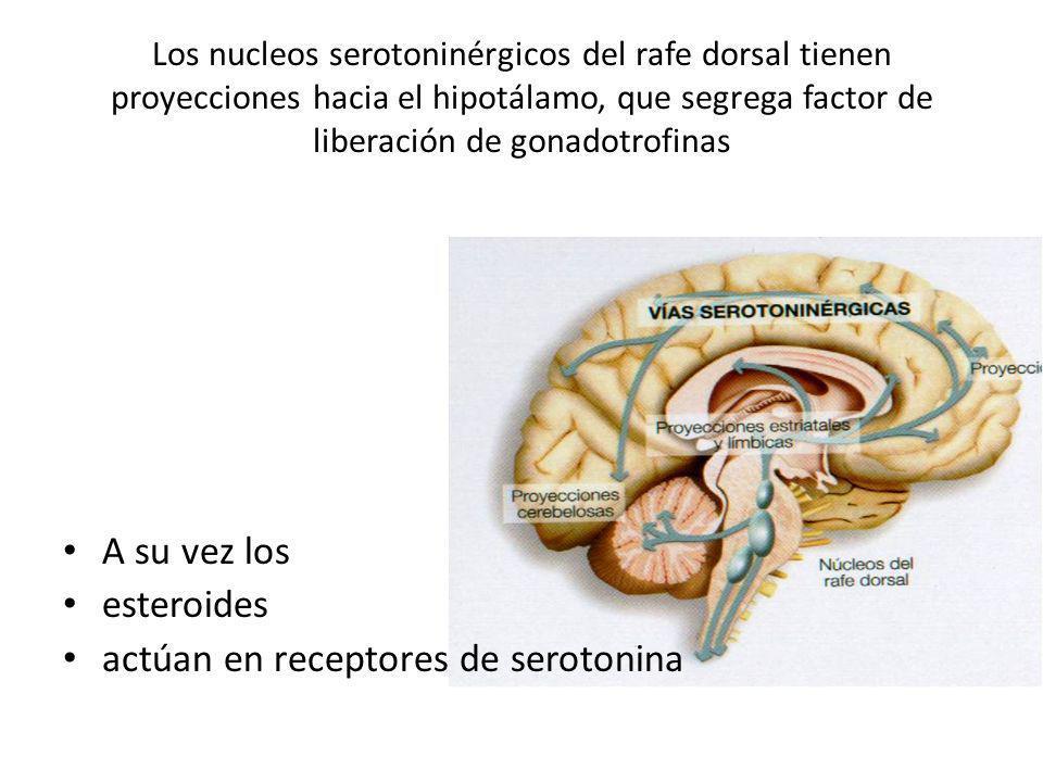 actúan en receptores de serotonina