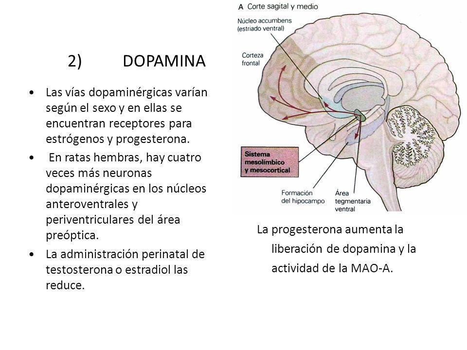 2) DOPAMINA Las vías dopaminérgicas varían según el sexo y en ellas se encuentran receptores para estrógenos y progesterona.