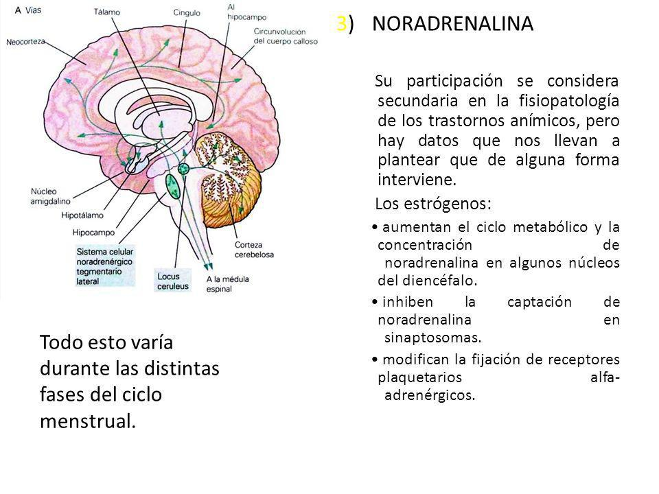 3) NORADRENALINA