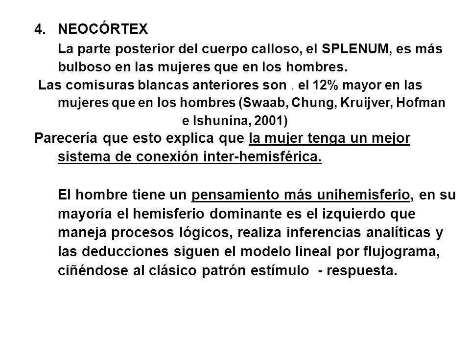 4. NEOCÓRTEX La parte posterior del cuerpo calloso, el SPLENUM, es más bulboso en las mujeres que en los hombres.
