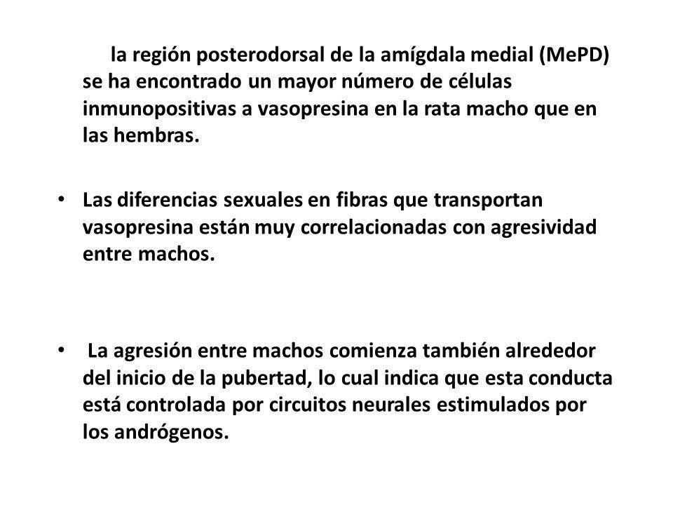 En la región posterodorsal de la amígdala medial (MePD) se ha encontrado un mayor número de células inmunopositivas a vasopresina en la rata macho que en las hembras.