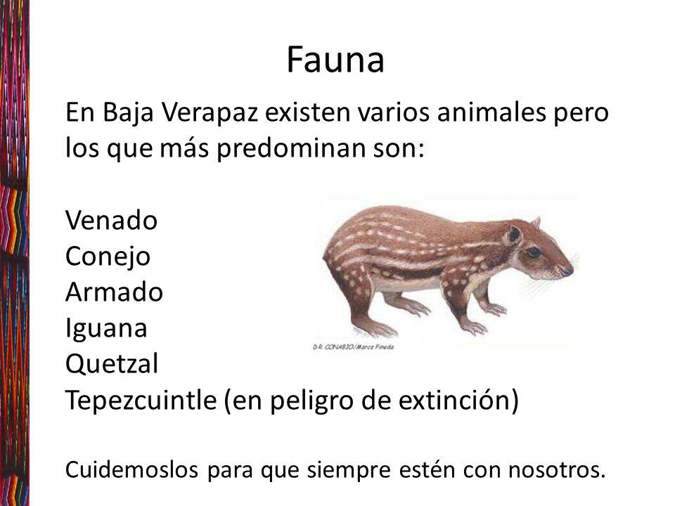 Fauna En Baja Verapaz existen varios animales pero los que más predominan son: Venado. Conejo. Armado.