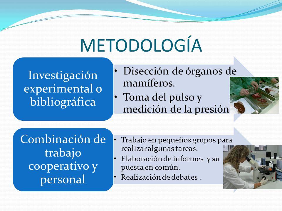 METODOLOGÍA Disección de órganos de mamíferos.