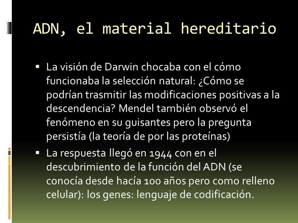 ADN, el material hereditario