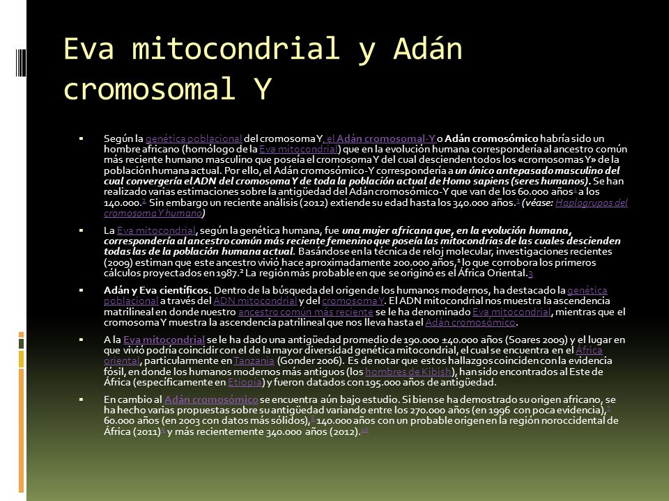 Eva mitocondrial y Adán cromosomal Y