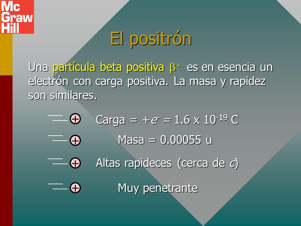 El positrón Una partícula beta positiva b+ es en esencia un electrón con carga positiva. La masa y rapidez son similares.