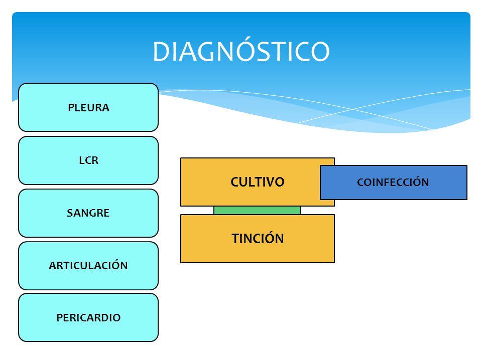 DIAGNÓSTICO CULTIVO TINCIÓN PLEURA LCR COINFECCIÓN SANGRE ARTICULACIÓN
