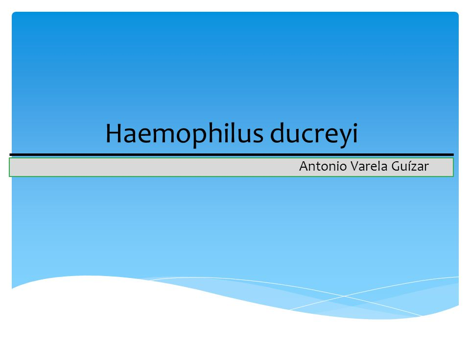 Haemophilus ducreyi Antonio Varela Guízar