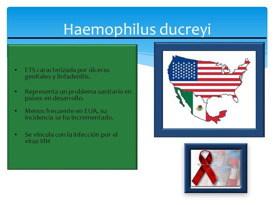 Haemophilus ducreyi Agente causal del chancro blando o chancroide.