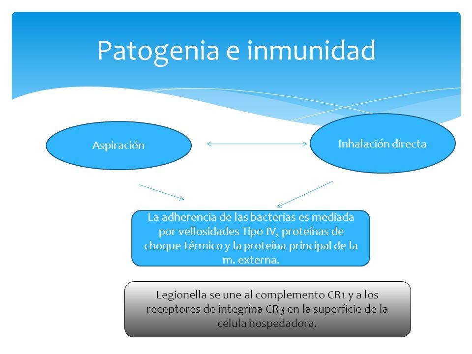 Patogenia e inmunidad Inhalación directa Aspiración