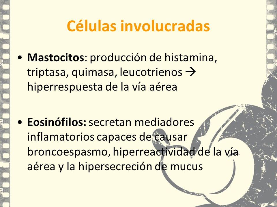 Células involucradas Mastocitos: producción de histamina, triptasa, quimasa, leucotrienos  hiperrespuesta de la vía aérea.