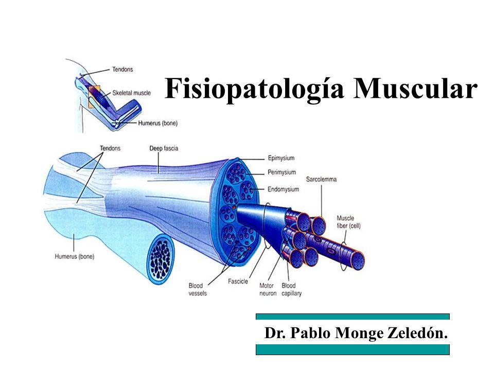 Fisiopatología Muscular
