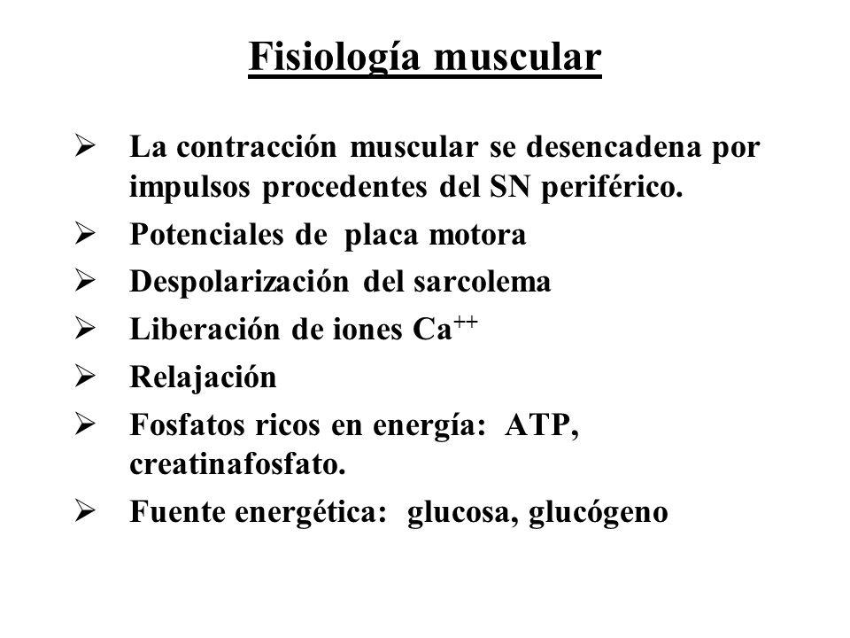 Fisiología muscular La contracción muscular se desencadena por impulsos procedentes del SN periférico.