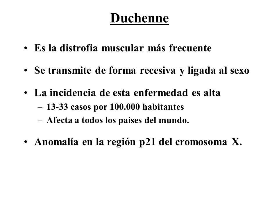 Duchenne Es la distrofia muscular más frecuente