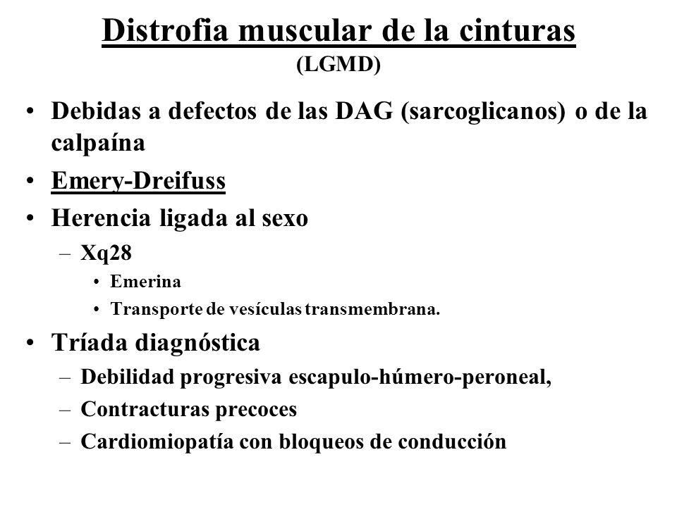 Distrofia muscular de la cinturas