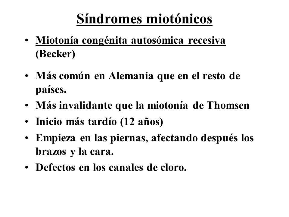 Síndromes miotónicos Miotonía congénita autosómica recesiva (Becker)