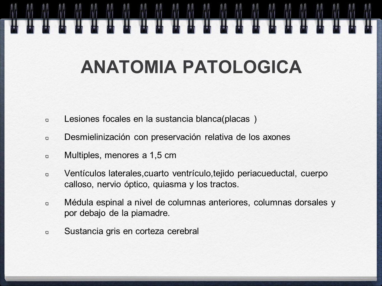 ANATOMIA PATOLOGICA Lesiones focales en la sustancia blanca(placas )