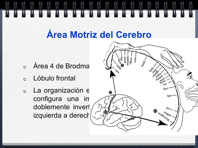 Área Motriz del Cerebro