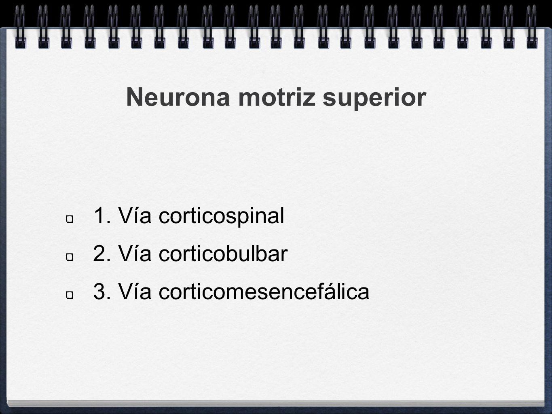 Neurona motriz superior