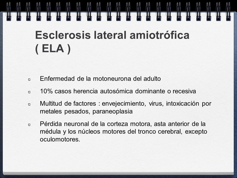 Esclerosis lateral amiotrófica ( ELA )
