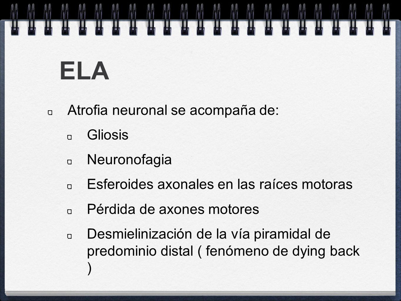 ELA Atrofia neuronal se acompaña de: Gliosis Neuronofagia