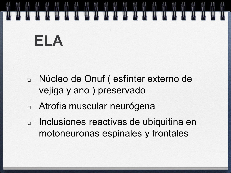 ELA Núcleo de Onuf ( esfínter externo de vejiga y ano ) preservado