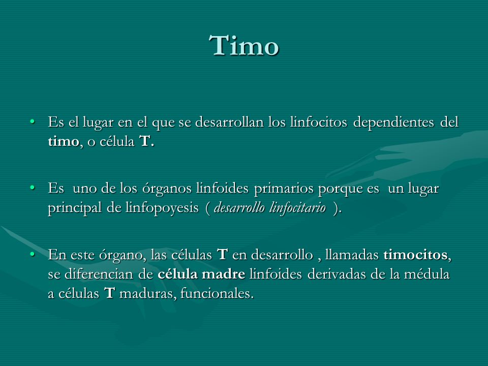 Timo Es el lugar en el que se desarrollan los linfocitos dependientes del timo, o célula T.