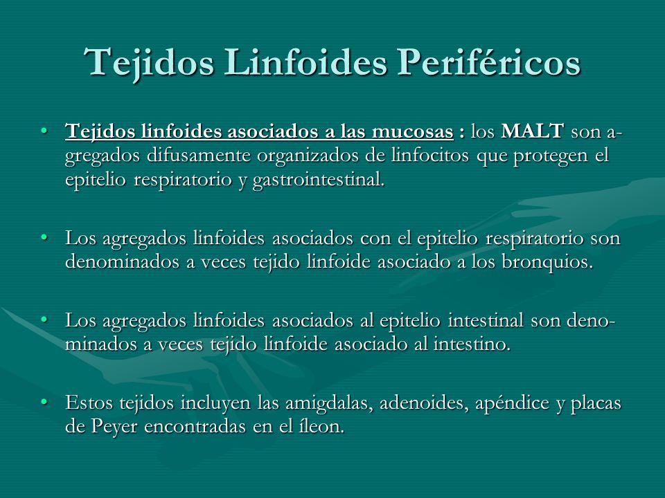 Tejidos Linfoides Periféricos