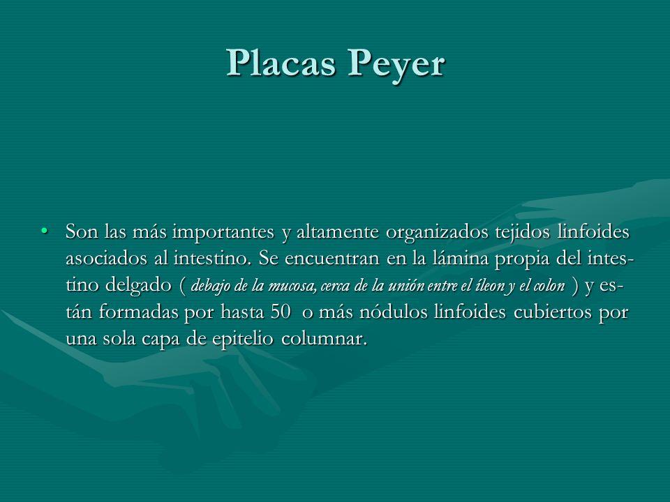 Placas Peyer