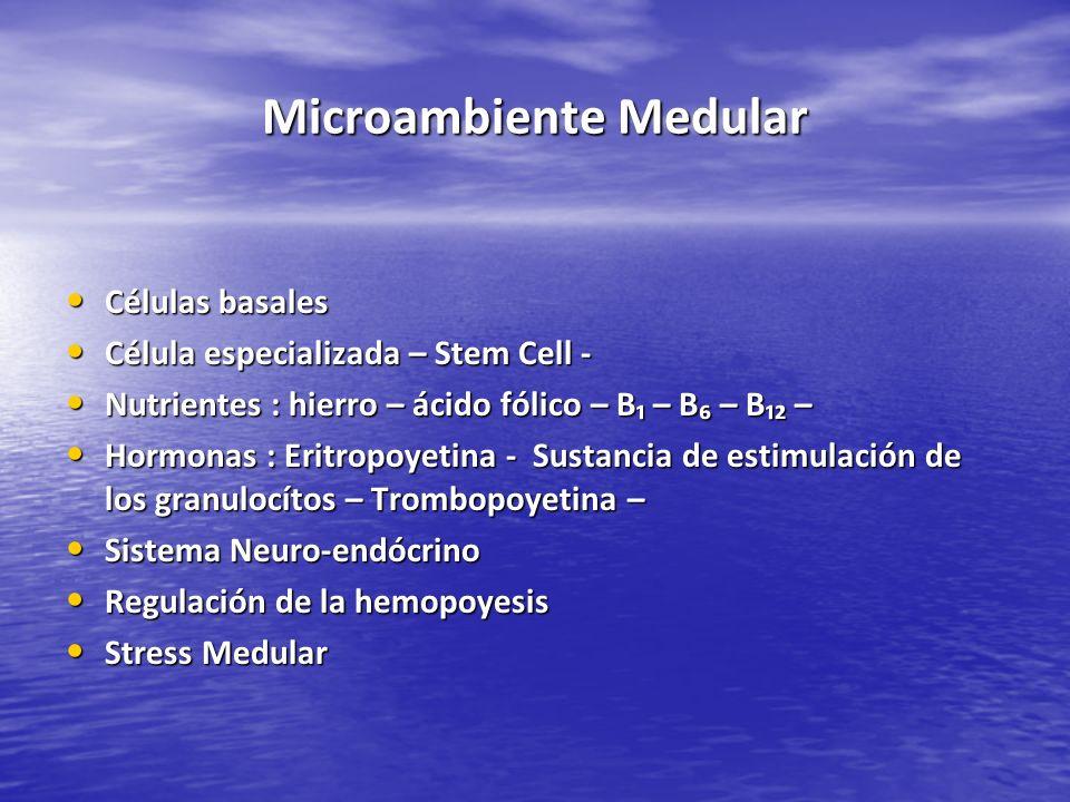 Microambiente Medular