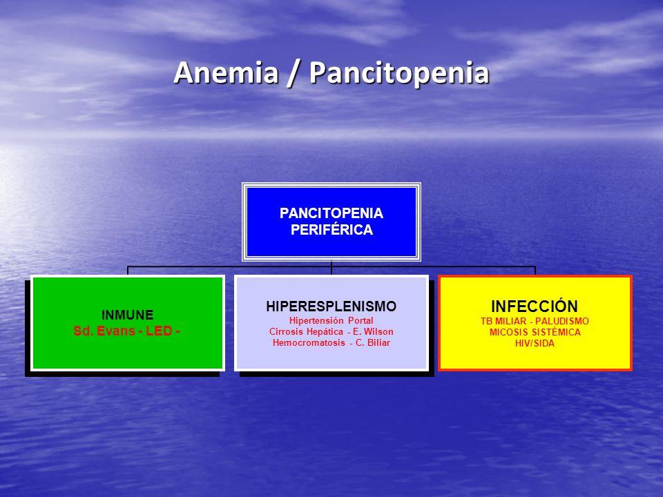 Anemia / Pancitopenia