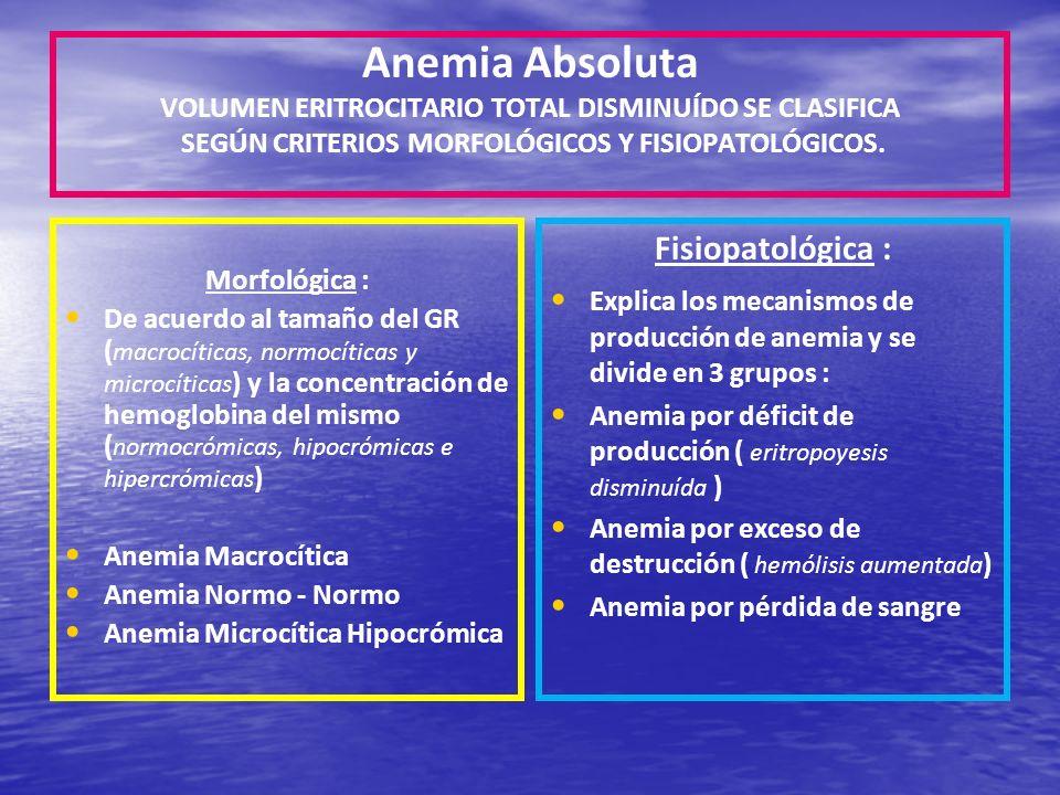 Anemia Absoluta VOLUMEN ERITROCITARIO TOTAL DISMINUÍDO SE CLASIFICA SEGÚN CRITERIOS MORFOLÓGICOS Y FISIOPATOLÓGICOS.