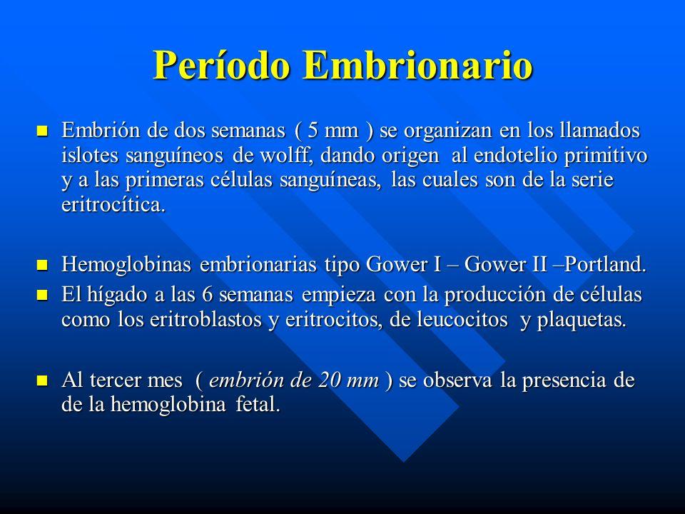 Período Embrionario