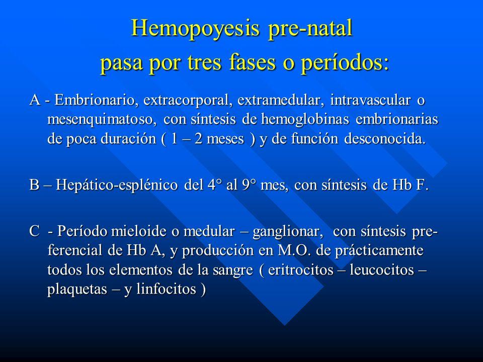Hemopoyesis pre-natal pasa por tres fases o períodos: