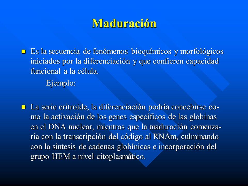 Maduración Es la secuencia de fenómenos bioquímicos y morfológicos iniciados por la diferenciación y que confieren capacidad funcional a la célula.