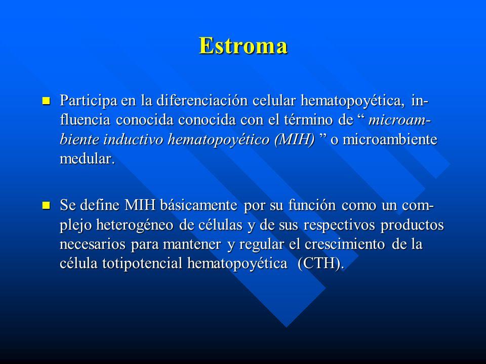 Estroma