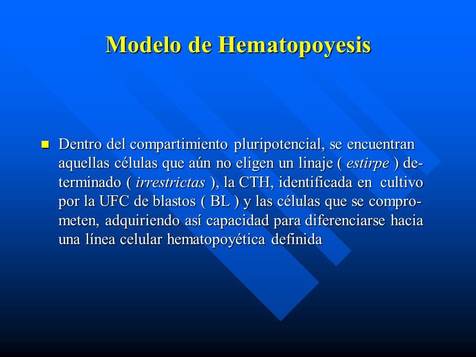 Modelo de Hematopoyesis