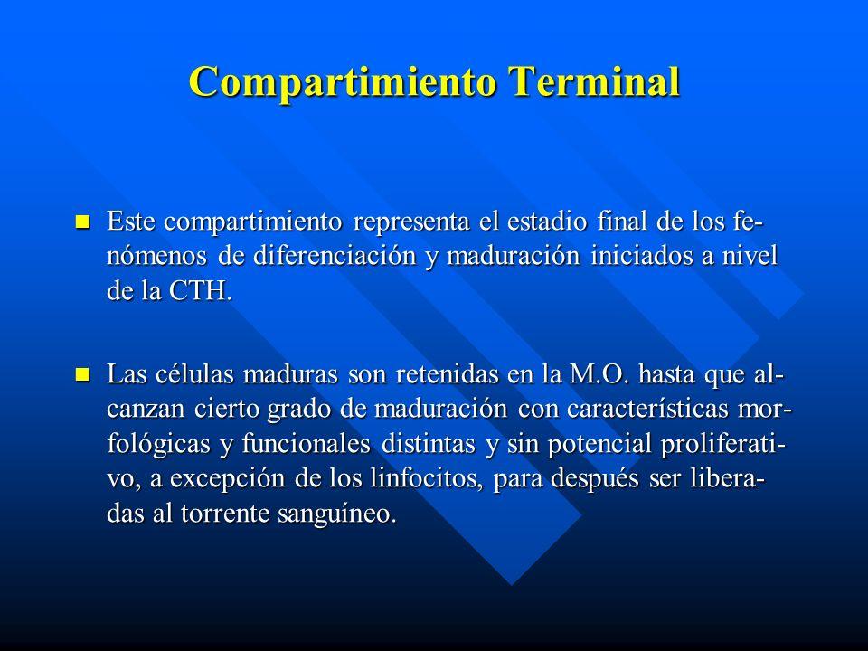 Compartimiento Terminal