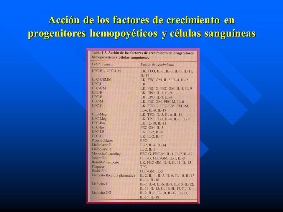 Acción de los factores de crecimiento en progenitores hemopoyéticos y células sanguíneas