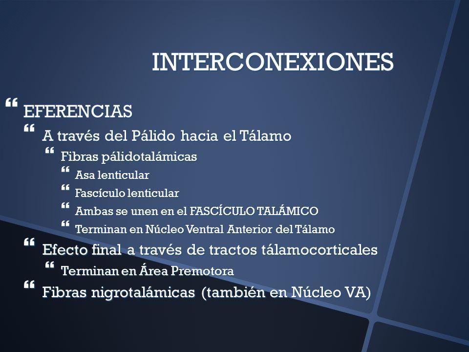 INTERCONEXIONES EFERENCIAS A través del Pálido hacia el Tálamo